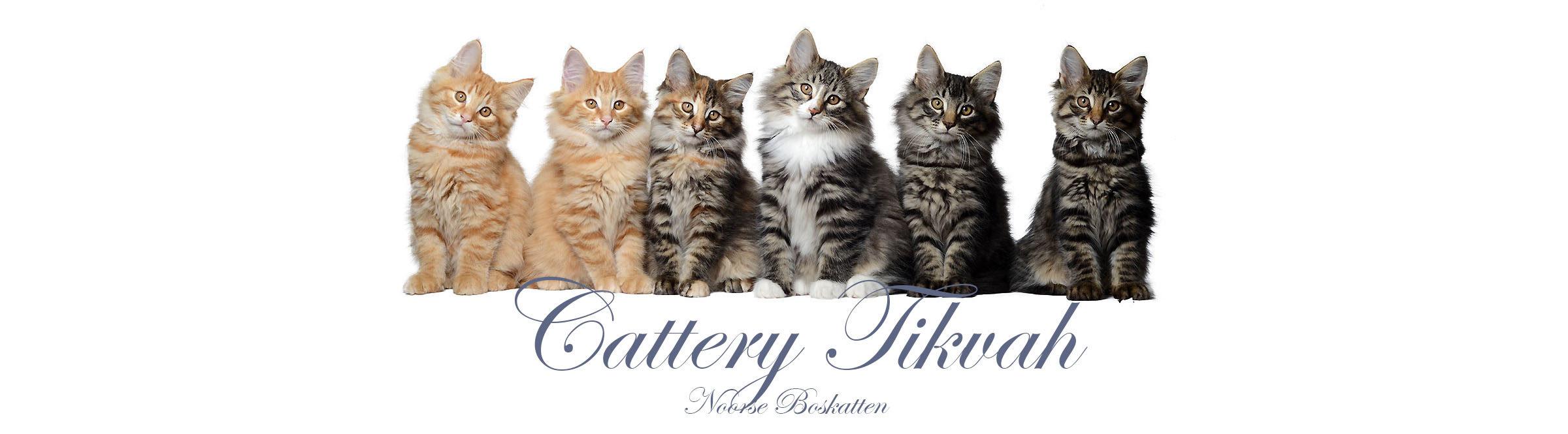 Cattery Tikvah