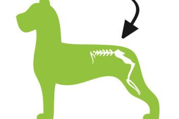 Dog_Mobility_hond.jpg