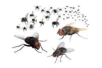 Vliegen & andere ongedierte bestrijding